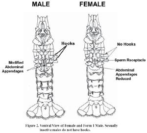 Male Anatomy Organ Diagram Male Dog Anatomy Diagram Wiring