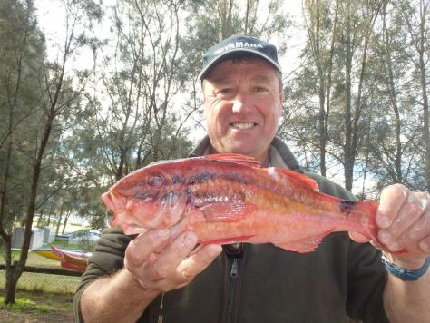 Alliman 2015 Aug Bayview  - Gunther Pfrengle (St George) – Goatfish