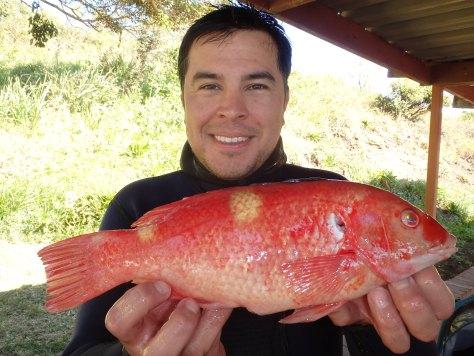 Derrick Cruz (SSD) with an unusual Foxfish (usually found in WA)