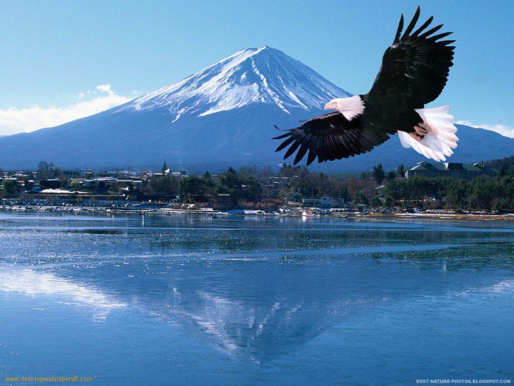 flying-eagle-1