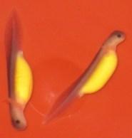 hellbender larvae