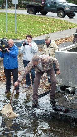 7,000 fingerlings are released from the truck into the St. Lawrence River, one net at a time. Credit: USFWS