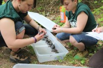 Bristol County Agricultural School sophomores partnered with species experts at Assabet River National Wildlife Refuge in Massachusetts to raise Blanding's turtles and releas them into wetland habitat.