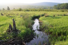 """The """"Little Black"""" winds through a headwater wetland in one of the Canaan Valley National Wildlife Refuge's most inaccessible spots. Credit: Ken Sturm/USFWS"""