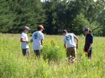 Youth Conservation Corps plant milkweed in woodcock habitat.