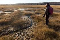 Chafee NWR salt marsh restoration USFWS