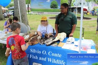 Kelsey Mackey at the McKnight Block Party using pelts as an education tool to teach a child about animals found in Massachusetts, and why it is important to protect them.