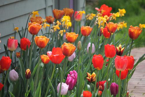 tulipOffice