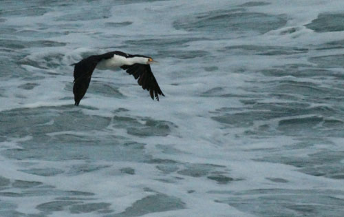 This little fella caught a fish in the sea, swallowed it and flew off.