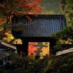 秋の彩りを味わおう。鎌倉の紅葉を満喫するおすすめコースをチェック