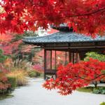 日本の秋を楽しむ京都の紅葉旅行 ホテルは満室必死。すぐに予約を!