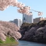 千鳥ヶ淵公園のお花見は場所取りは禁止!?桜を楽しむための注意事項