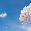 船岡城址公園の桜をスロープカーで楽しむ醍醐味とは?他の見所も紹介