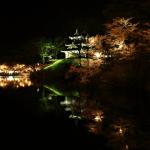 日本三大夜桜 高田公園の桜は別格!ライトアップ時間と見頃にご注意