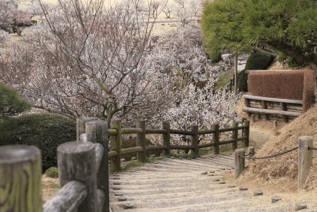 偕楽園の梅まつり期間中の所要時間を通常の観光と比べた実際のところ