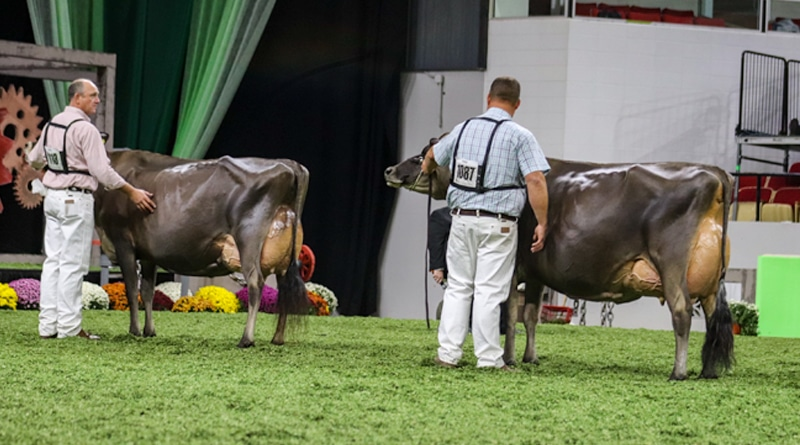 Vierra Dairy Exhibits World Dairy Expo Champions