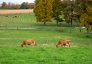 Modern dairy production efficiencies reducing environmental impact