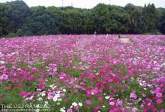 万博公園 花の丘
