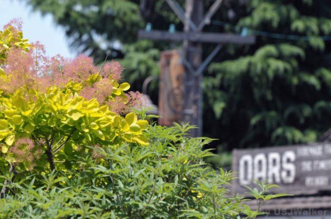 USJの植栽