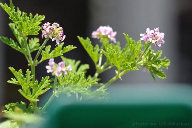 USJの植栽たち