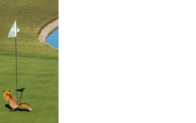 Naturen protesterar mot alla golfbanor!