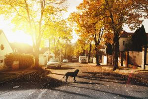 Moving from NYC to a small town can reduce stress