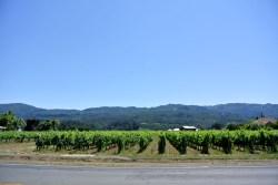 Napa Valley Wine (3)