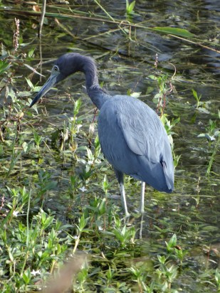 Everglades NP (1)