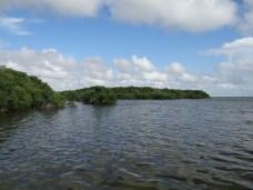 Everglades NP (31)