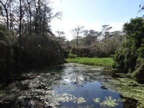Everglades NP (8)