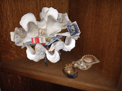Scott Gossler's shell from dive in Mindoro Straights image
