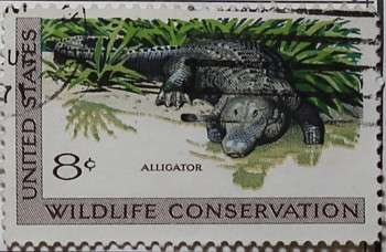 1971 Wildlife Conservation - Alligator 8c