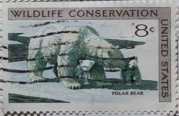 1971 Wildlife Conservation - Polar Bear 8c