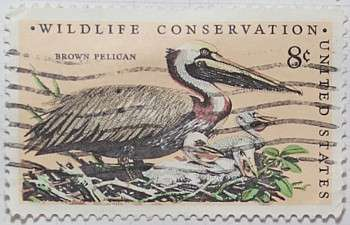 1972 Brown Pelican 8c