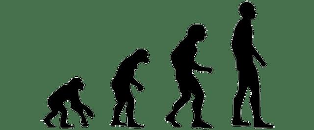達爾文進化論evolution-2780651_640