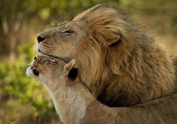 Тест: Каким животным вы были в прошлой жизни?