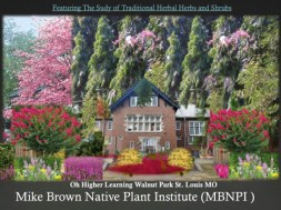 traditional-herbal-herbs-and-shrubs-michael-brown-native-plants-institute-oh-higher-learning-walnut-park-st-louis-mo