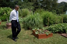 President_Obama_walking_in_the_White_House_Kitchen_Garden