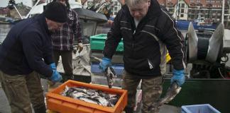Komisja Europejska zaproponowała kwoty połowowe ryb na 2016 rok - ustka24.info