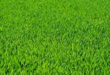 Jak dobrać mieszankę traw rolniczych na suche tereny? - ustka24.info