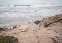 Kilkumilionowe straty na środkowym wybrzeżu po ostatnim sztormie - ustka24.info