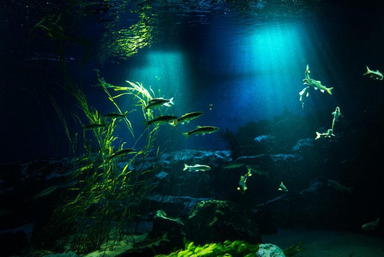 水の中に光が指す