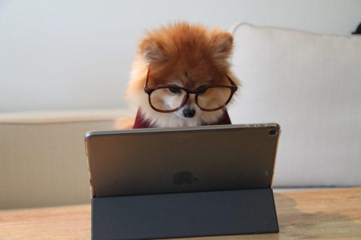 犬がメガネを掛けてパソコンをしてる