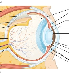 predefined space to label the structures and regions of the human eye anatomy [ 2175 x 1242 Pixel ]