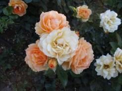 Yoneda garden tour 02