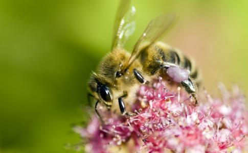 bee[1]