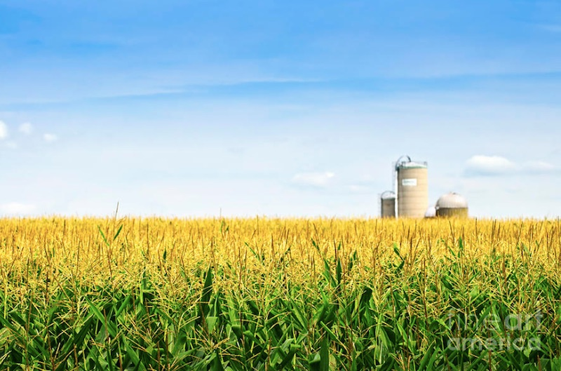 Farmers Union Urges Immediate Action on E15 Waiver