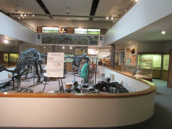 There are lots of dinosaur fossils to see in here.
