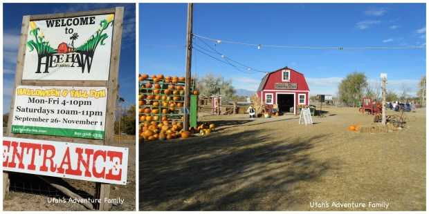 Hee Haw Farms is a fun farm and pumpkin patch.