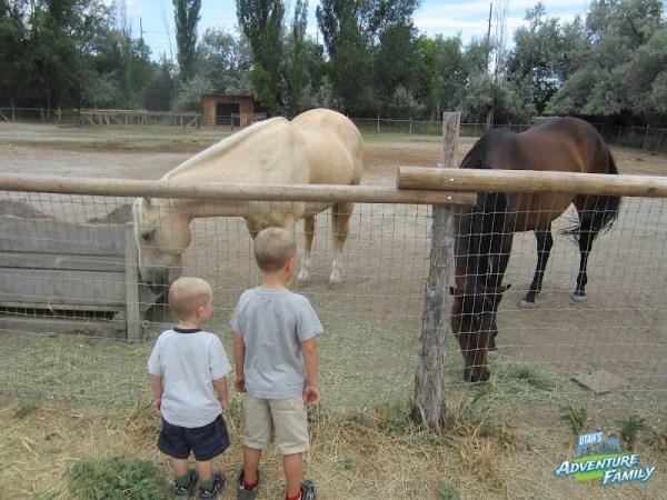 we especially loved the horses - Wheeler Farm Halloween